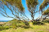 Wide tree next to sea — Stock Photo