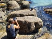Cara faz uma foto de pinguim do cabo — Foto Stock