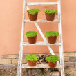 Array of plant pots on a ladder - Stock Photo