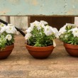 Three flower pots — Stock Photo