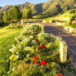 Flower bed against mountains — Stock Photo