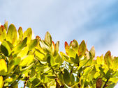 Leaves against sky — Stock Photo