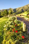 Blomma säng mot bergen — Stockfoto