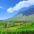 Stock Photo: Vineyards against awesome mountains