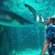 Young man watches a shark — Stock Photo