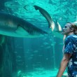 Young man watches a shark - Foto Stock