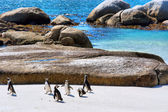 Group of penguins plays on beach — 图库照片