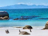 Pingouins sur la plage, des montagnes à l'horizon — Photo