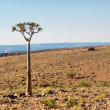 Lonely tree in stone desert — Stock Photo