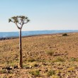 Stock Photo: Lonely tree in stone desert