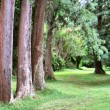Stock Photo: Line of trees forming perspective