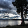 Tree on lake under dramatic skies — ストック写真