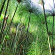 Garden reed-like plants in sunset light - Stock Photo