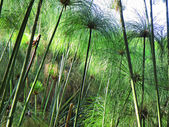 Garden reed-like plants in sunset light — Stock Photo