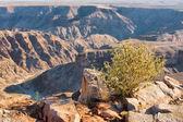 Small desert plan against canyon — Stock Photo