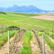 Stockfoto: Wine and wheat farms