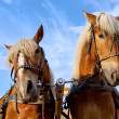 Two horses in city — Stock Photo