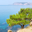 Pine tree next to sea - Stock Photo