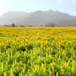 Field of yellow wild flowers — Stock Photo
