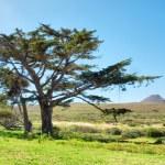 ������, ������: Huge tree