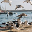 Seagulls feed in port — Stock Photo #25293975