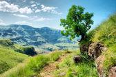 Protea boom op trail — Stockfoto