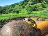 маленькая зеленая жаба дерево загорает на ржавый шар — Стоковое фото