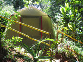 Tent in tropical forest — Stock Photo