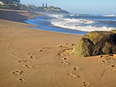Rock on beach and footprints on sand — Стоковое фото