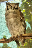 Great horned owl sits in shade — Stock Photo