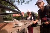 детей кормить лама — Стоковое фото