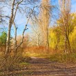 Track between willows and naked poplars — Stock Photo #32410525