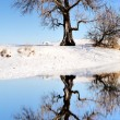 Huge tree next to winter lake — Stock Photo #32411307