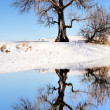 Huge tree next to winter lake — Stock Photo