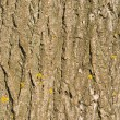 Bark of wood with yellow lichen spots in sunny day — Stock Photo