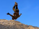 Teenager performs freerunning somersault on sand hill — Stock Photo