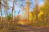 A track between willows and naked poplars — Stock Photo