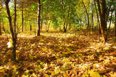 紅葉のカーペット — ストック写真
