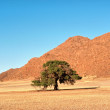 Lonely tree in desert — Stock Photo