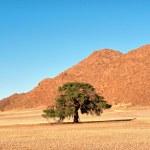 Lonely tree in desert — Stock Photo