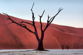 Petrified tree against majestic red dunes — Stock Photo
