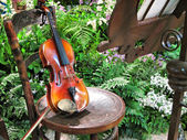 Violin in garden — Stock fotografie