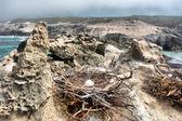 Bird's nest with eggs on rocky beach — Stock Photo