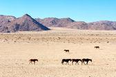 Wild horses walk in desert — Photo