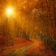 Sunrise in autumn forest — Stock Photo #20099359