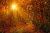 Sunrise in autumn forest — Stock Photo
