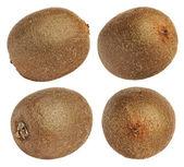 Kiwi fruit isolated on white background — Stock Photo