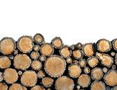 Tree felling — Stock Photo