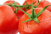 Perfect fresh red wet tomatoes with tomato on background, very s — Stock Photo