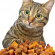 Stock Photo: Cat eating dry cat food from metal bowl